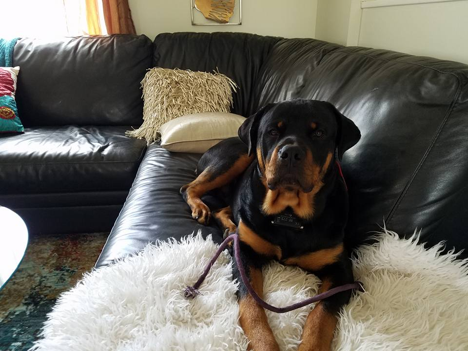 Welcome To Mustang Rottweilers